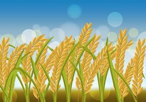 Riz Crop Flowers In The Field vecteur