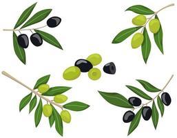 ensemble de branches d'olivier
