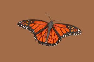 papillon orange papillon dessin à la main réaliste