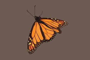 dessin à la main de papillon vecteur