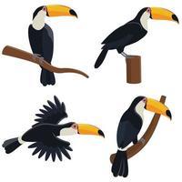 toucan dans différentes poses vecteur