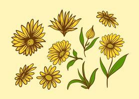 Fleur de calendula gratuite vecteur