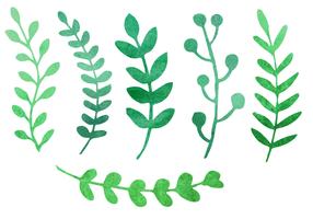 Vecteur de plantes aquarelles gratuit