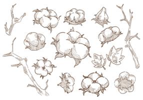 Vecteur de plante de fleur de coton