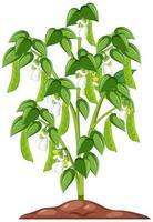haricots verts dans un style cartoon vecteur