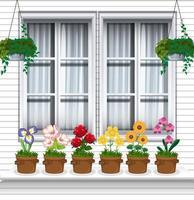 fleurs en pot près de la fenêtre vecteur