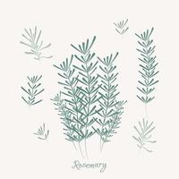 éléments de romarin. herbes de romarin isolés