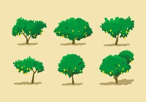 Ensembles vectoriels d'arbres à la mangue vecteur
