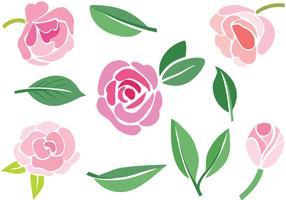 Vecteurs Camellia gratuits vecteur