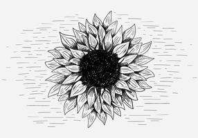 Illustration vectorielle libre de tournesol vecteur