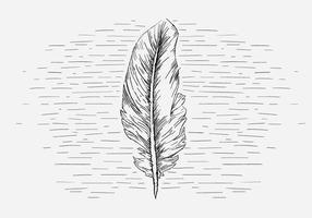 Illustration de plume de vecteur libre