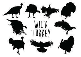Turquie Silhouette sauvage vecteur
