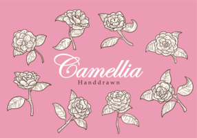 Free Hand Drawn Camellia fleurs Vecteurs vecteur