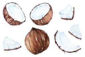 ensemble aquarelle de noix de coco