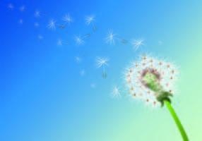 Arrière-plan de pissenlit Fleurs