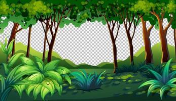 fond transparent de paysage extérieur nature