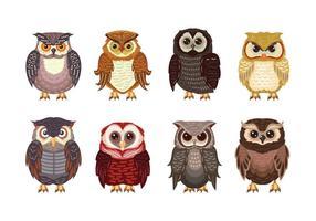 Owl ou Buho Theme Collection vecteur