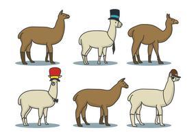 Llama Main Set Illustration Drawn vecteur