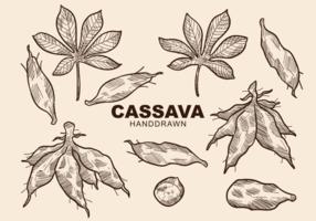 Free Hand Drawn Cassava Vecteurs vecteur