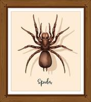 araignée sur cadre wwoden vecteur
