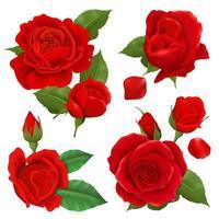 ensemble de fleurs roses réalistes vecteur