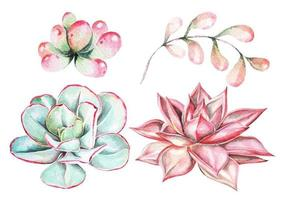 ensemble succulent aquarelle