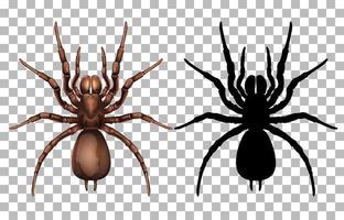 araignée et silhouette vecteur
