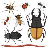 ensemble de différents insectes vecteur