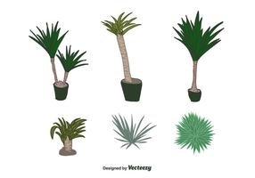 Vector Yucca Plante