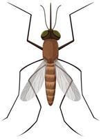 moustique sur fond blanc