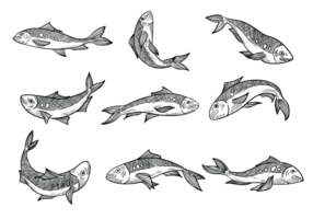 Free Hand Drawn Sardine Vecteurs vecteur