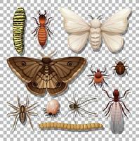 ensemble de différents insectes isolés vecteur