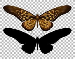 papillon et sa silhouette vecteur