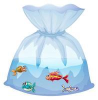 mignon, poissons, dans, sac plastique, dessin animé, isolé vecteur