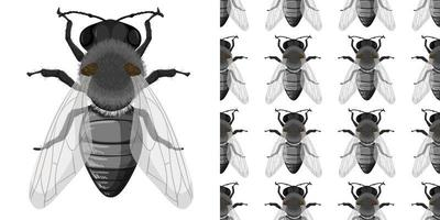 insectes mouches isolés sur fond blanc et sans soudure vecteur