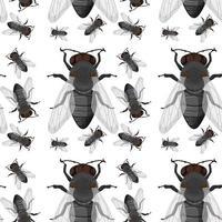 mouche insecte fond transparent vecteur