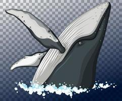 tête de baleine bleue dans l'eau sur fond transparent