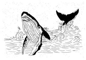 Whale Hand Drawn Vector gratuit