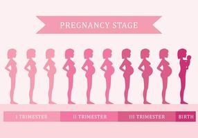 Etape de grossesse vecteur