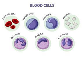 type de cellules sanguines