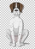 Pointeur allemand en position assise personnage de dessin animé isolé sur fond transparent