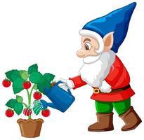gnome, arrosage, tomate, arbre, dessin animé, caractère, blanc, fond