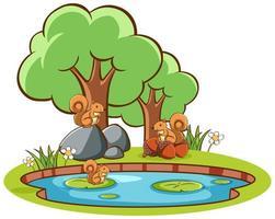 photo isolée des écureuils au bord de l'étang vecteur