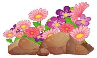 Fleurs de marguerite rose gerbera sur fond blanc vecteur