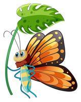 Buttefly tenant une feuille verte sur fond blanc