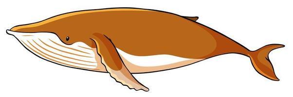 baleine brune sur fond blanc vecteur