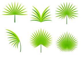 Palmetto leafs vector