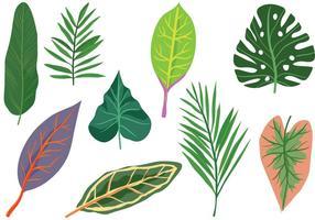 Vecteurs feuilles exotiques libres vecteur