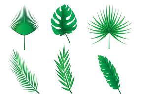 Feuilles de palmier Vecteurs vecteur