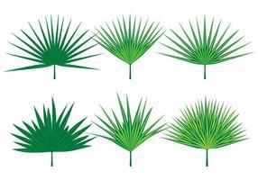 Vecteurs de feuilles de palmetto vecteur